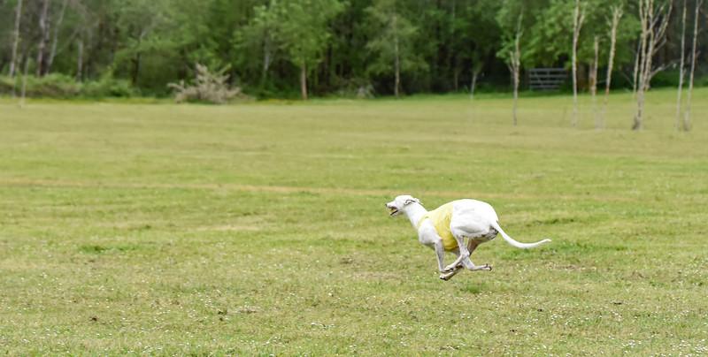 satfinalBoBgreyhound-4
