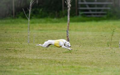 satfinalBoBgreyhound-17