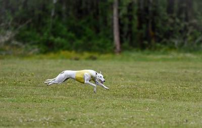 satfinalBoBgreyhound-16
