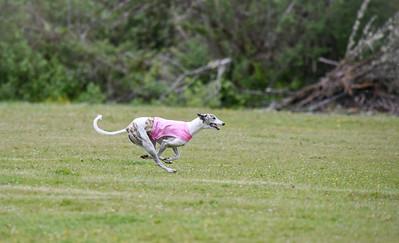 satfinalBoBgreyhound-11