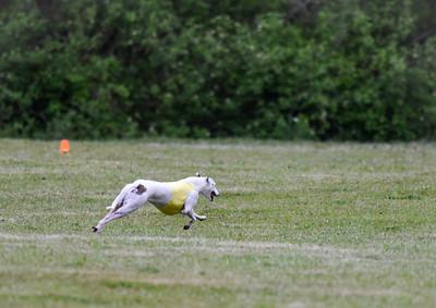 satfinalBoBgreyhound-8