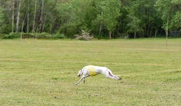 satfinalBoBgreyhound-5
