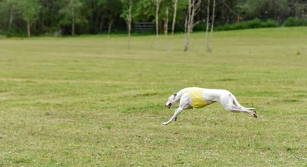satfinalBoBgreyhound-3