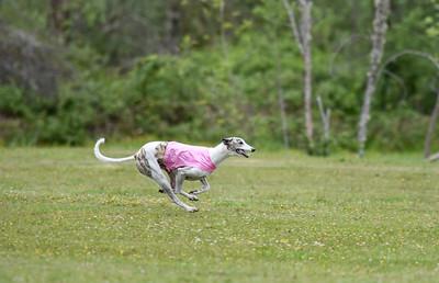 satfinalBoBgreyhound-14