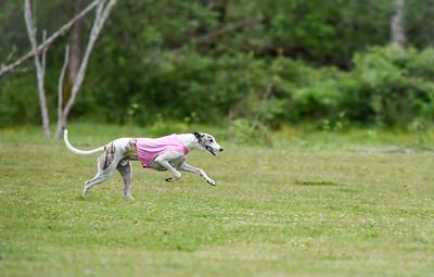 satfinalBoBgreyhound-15