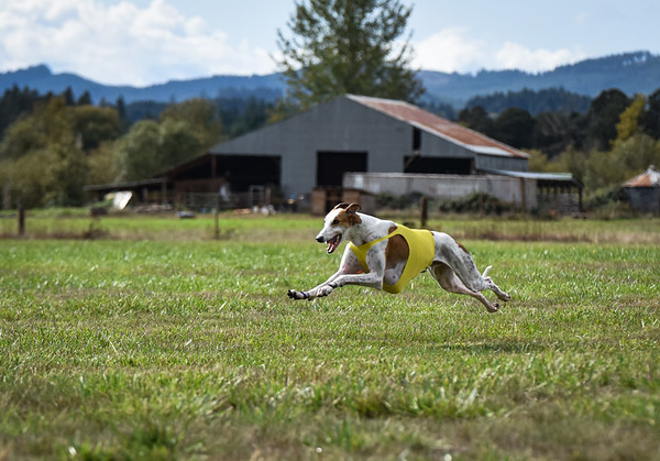 satfinalgreyhound1-23