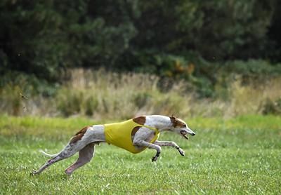 satfinalgreyhound1-6
