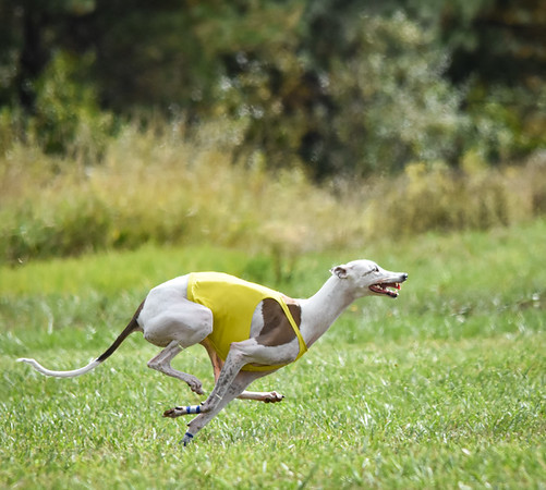 satfinalgreyhound2-2