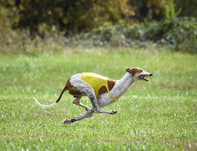 satfinalgreyhound1-7