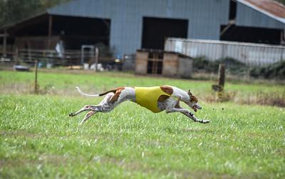satfinalgreyhound1-14