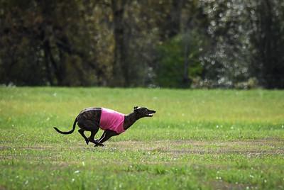 satfinalgreyhound1-12