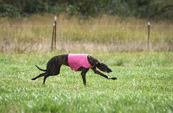 satfinalgreyhound1-3