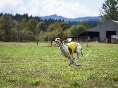 satfinalgreyhound1-24