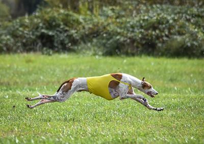 satfinalgreyhound1-8
