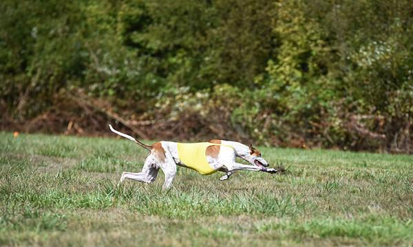satfinalgreyhound1-17