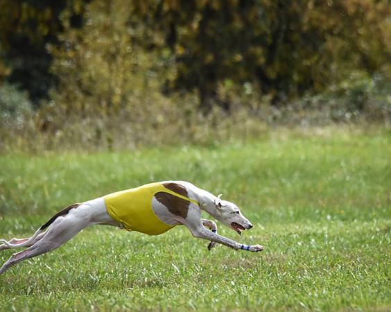 satfinalgreyhound2-3