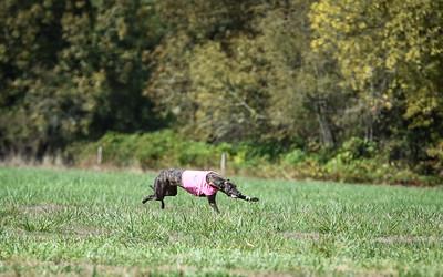 satfinalgreyhound1-15