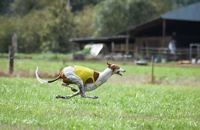 satfinalgreyhound1-13