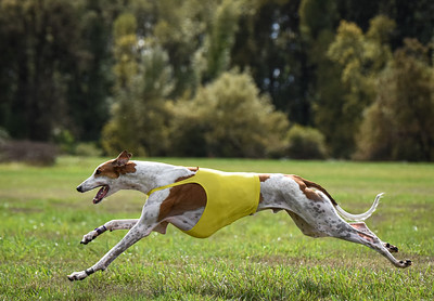 satfinalgreyhound1-26