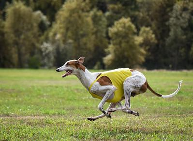 satfinalgreyhound1-25