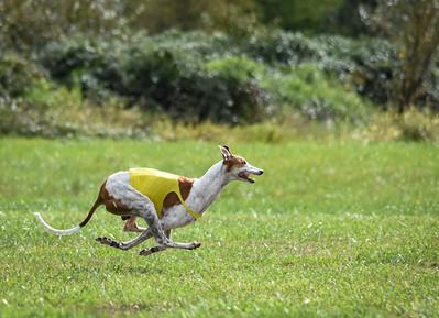 satfinalgreyhound1-9