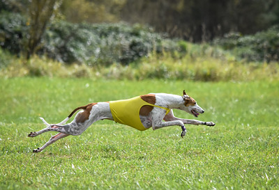 satfinalgreyhound1-10