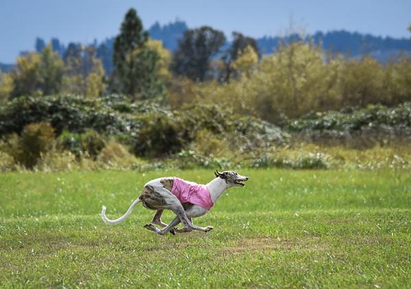 satfinalgreyhound2-4