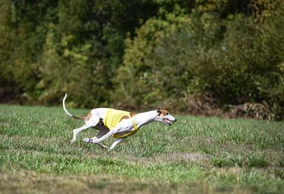 satfinalgreyhound1-16