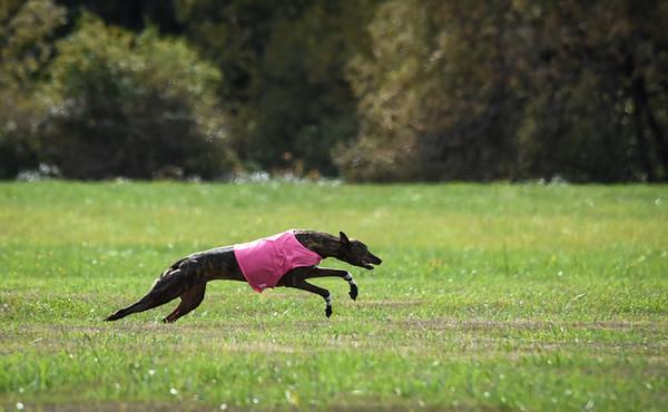 satfinalgreyhound1-11