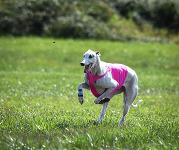 sunfinalgreyhound-15