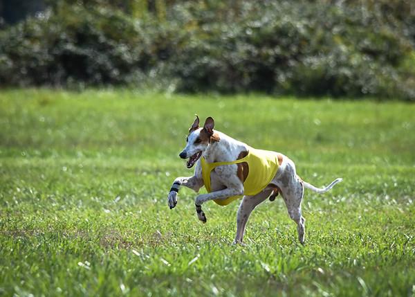 sunfinalgreyhound-14
