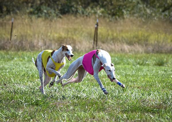sunfinalgreyhound-3