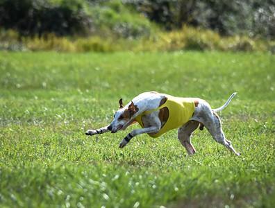 sunfinalgreyhound-13