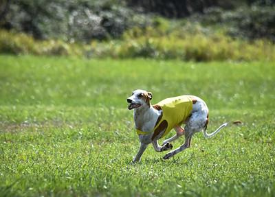 sunfinalgreyhound-12