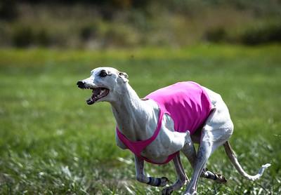 sunfinalgreyhound-17