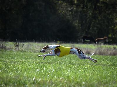 sunfinalgreyhound-8