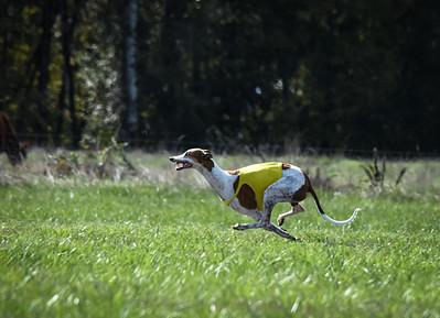sunfinalgreyhound-9