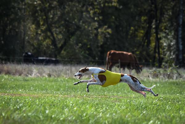 sunfinalgreyhound-10