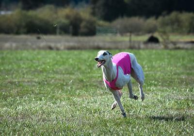 sunfinalgreyhound-22