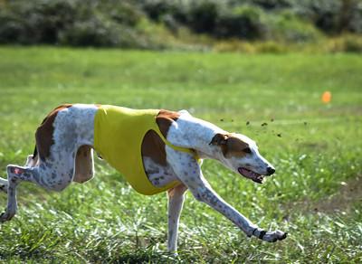 sunfinalgreyhound-4