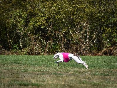 sunfinalgreyhound-18