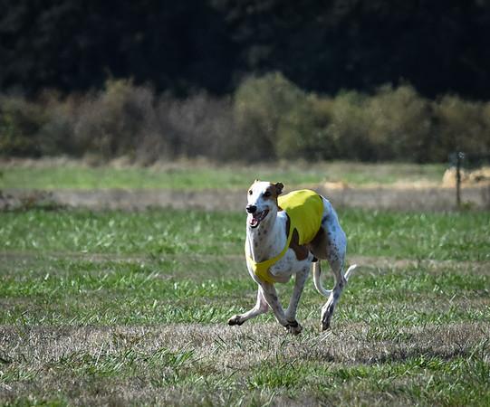 sunfinalgreyhound-21