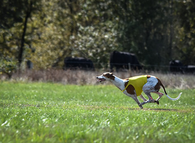 sunfinalgreyhound-11