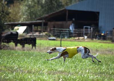 sunfinalgreyhound-6