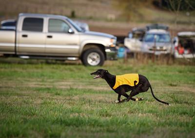 satbobgreyhound-14
