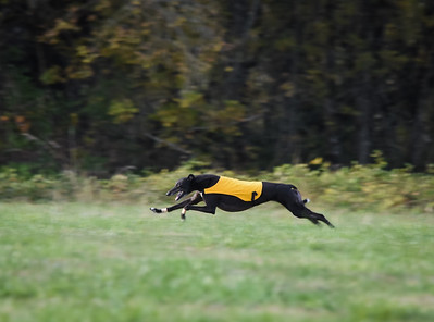 satbobgreyhound-9