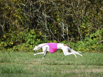satfinalgreyhound1-5