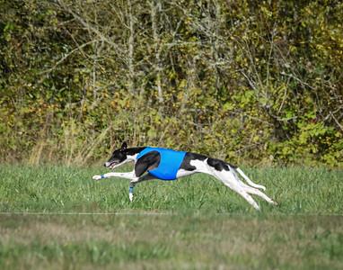 satfinalgreyhound1-4