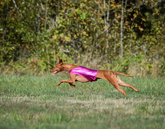 satfinalpharoahhound1-8
