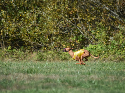 satfinalpharoahhound1-10